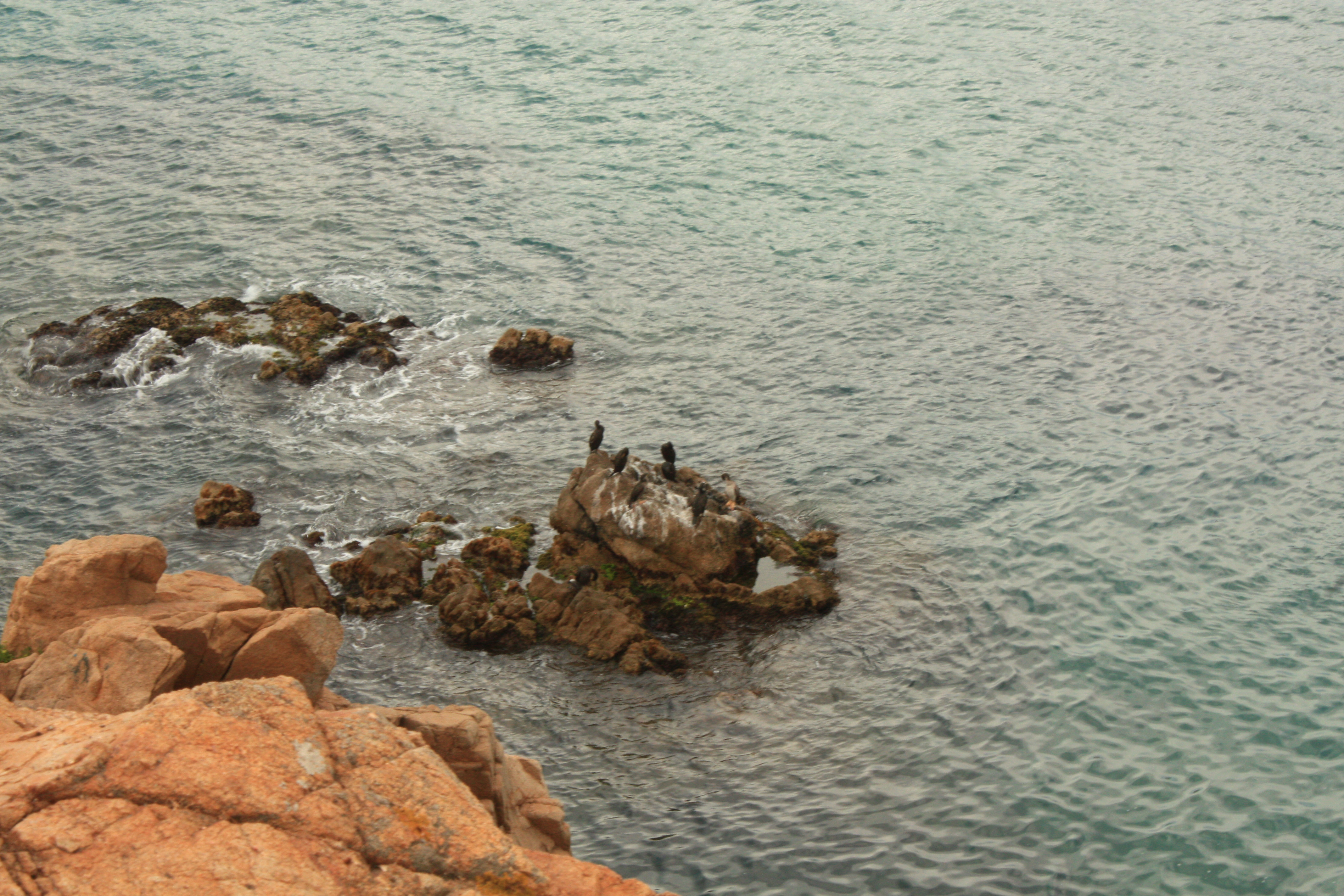 Blanes8